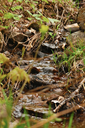 Feeder creeks providing a source of clean water to the watershed